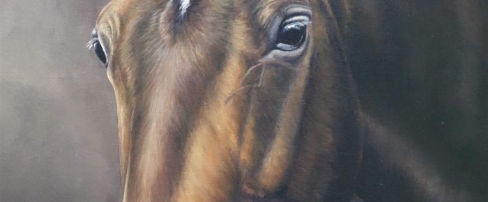 Latest Horse Portrait